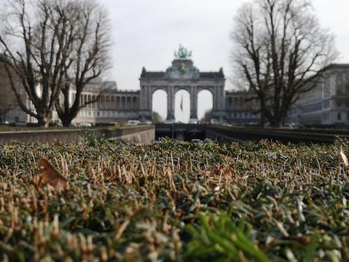 Kostenloses Stock Foto zu architektur, bäume, belgien, brüssel