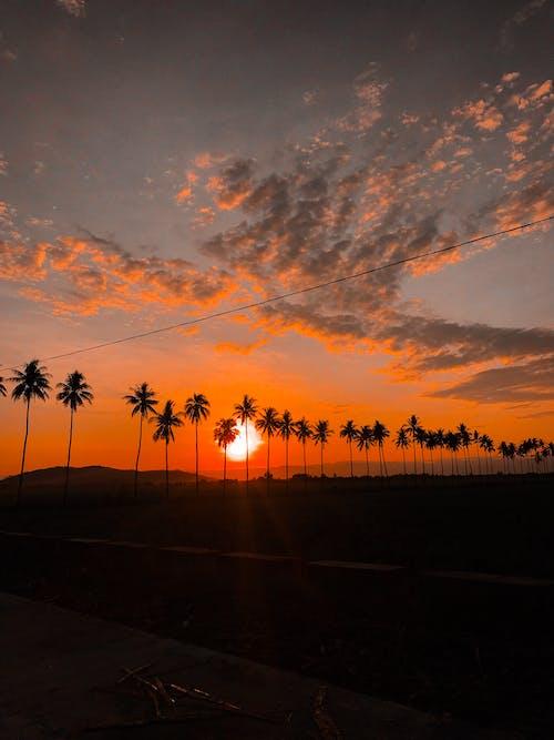 Gratis lagerfoto af aften, aftensol, farver, gylden sol