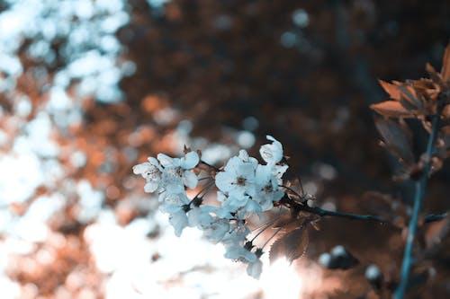 Gratis lagerfoto af blomster, flora, kronblade, makro