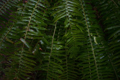 Green Ferns in Close-up Photography