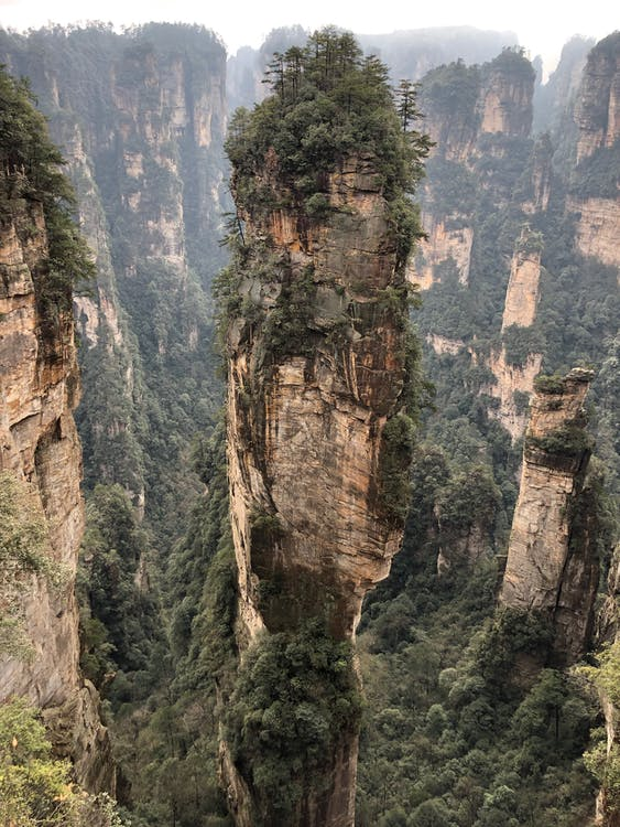 bäume, berge, canyon