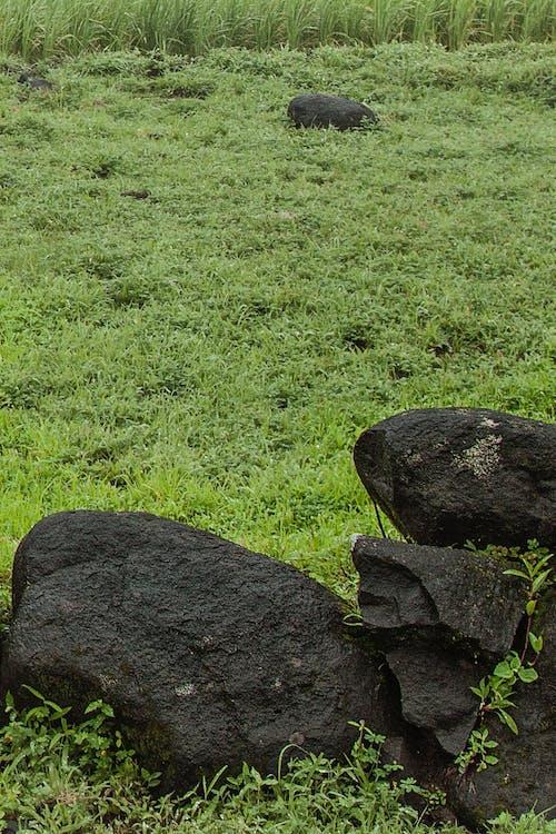 Бесплатное стоковое фото с камень, трава