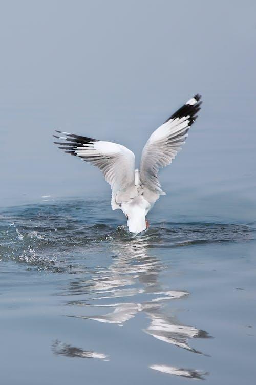 Бесплатное стоковое фото с чайка