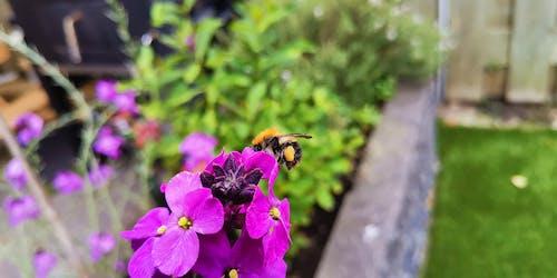 Fotos de stock gratuitas de abejorro, naturaleza, primavera