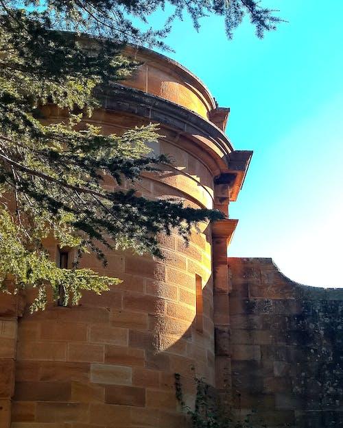 Základová fotografie zdarma na téma pískovec, větev, věž, zeď