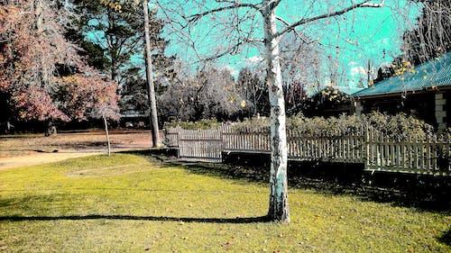 Základová fotografie zdarma na téma listy, plotový plot, podzim, strom