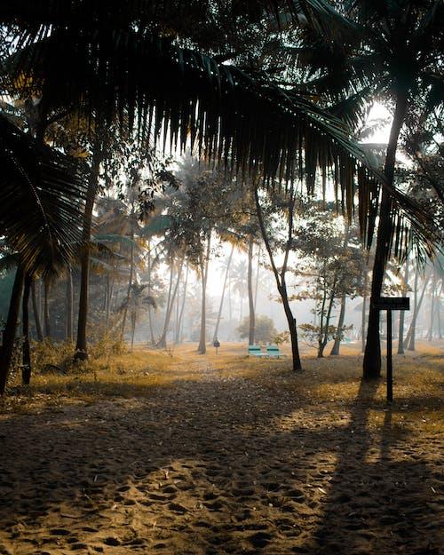 Immagine gratuita di alberi, alberi di cocco, cielo, erba