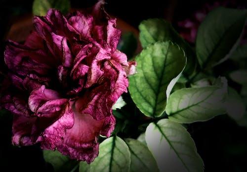 Ingyenes stockfotó asztali háttérkép, Első virágok, gyönyörű virág, háttérkép témában