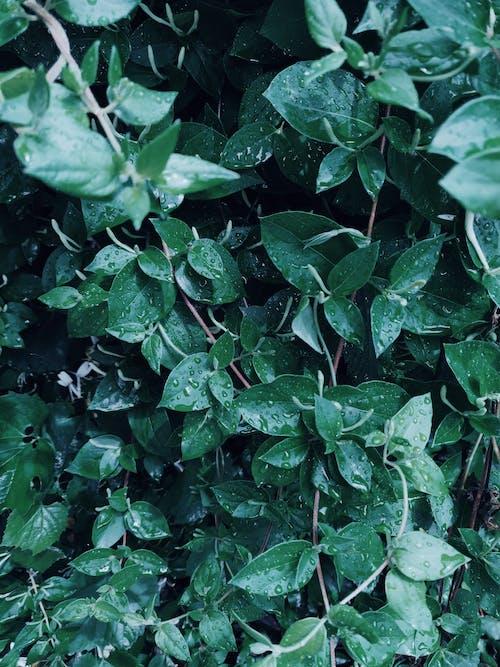 Green Leafed