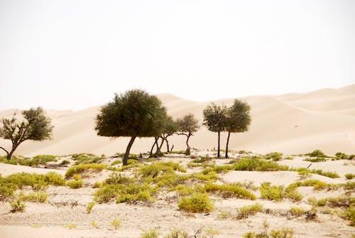 Fotobanka sbezplatnými fotkami na tému arídny, exteriéry, malebný, pieskové duny