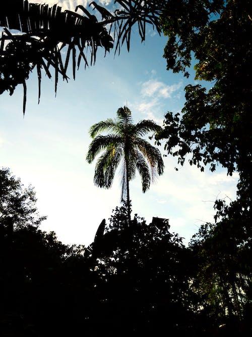 Fotobanka sbezplatnými fotkami na tému cestovať, dlaň, džungľa, ekvádor