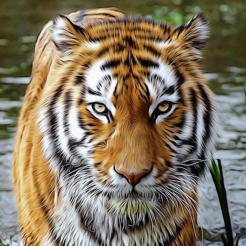 Free stock photo of animal head, animal portrait, cat, digital manipulation