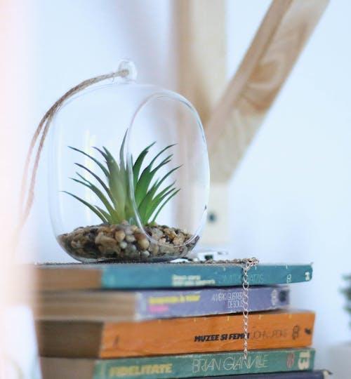 Gratis stockfoto met boeken, boekenplank, cactus, eenvoudig