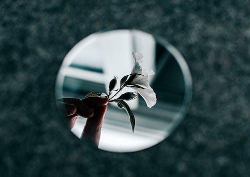 反射, 植物群, 花, 鏡子 的 免費圖庫相片