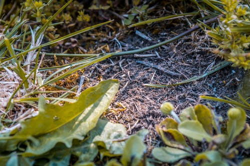 Ilmainen kuvapankkikuva tunnisteilla kauneus luonnossa, pensaikko