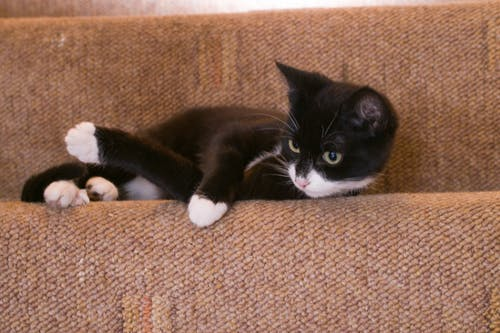 Free stock photo of alert, black, cat