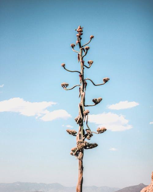 アウトドア, フラワーズ, フローラ, 咲くの無料の写真素材
