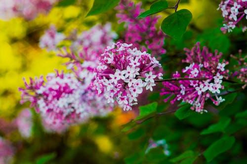 Fotos de stock gratuitas de flor, flores bonitas, jardín, jardín de flores