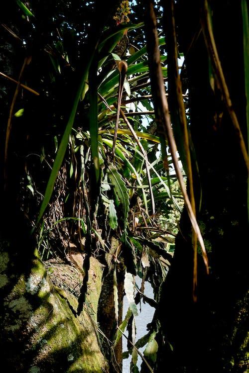 トロピカル, 屋外, 植物, 緑の無料の写真素材