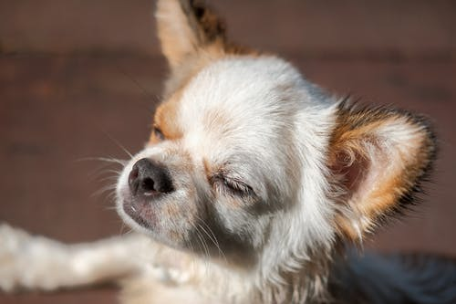 ペット, 可愛い, 太陽, 子犬の無料の写真素材