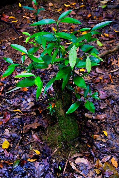 나뭇잎, 녹색, 식물, 야외에서의 무료 스톡 사진