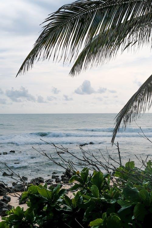 나뭇잎, 녹색, 모래, 바다의 무료 스톡 사진