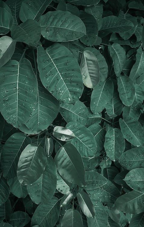나뭇잎, 녹색, 성장