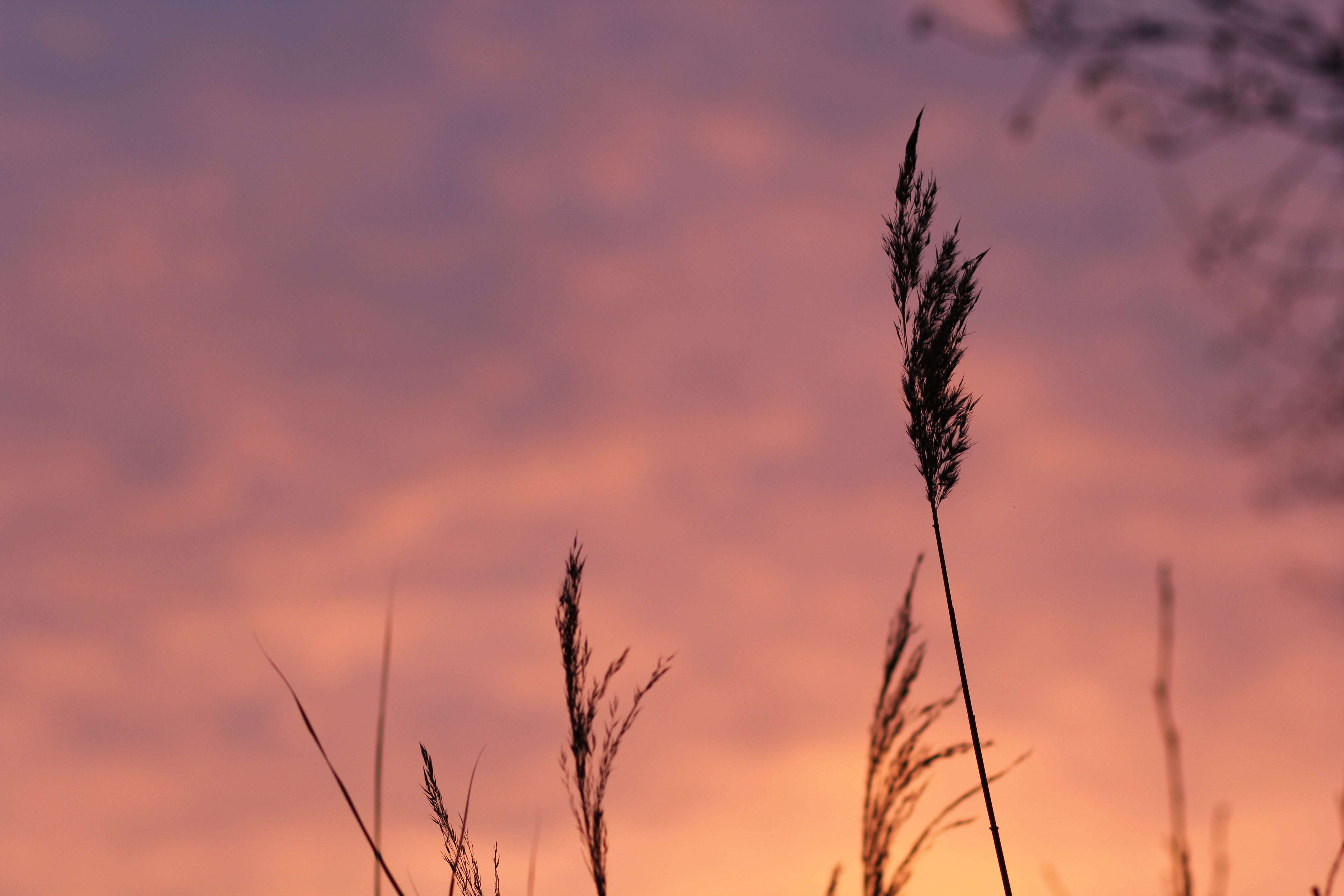 Free stock photo of field, meadow, sunset