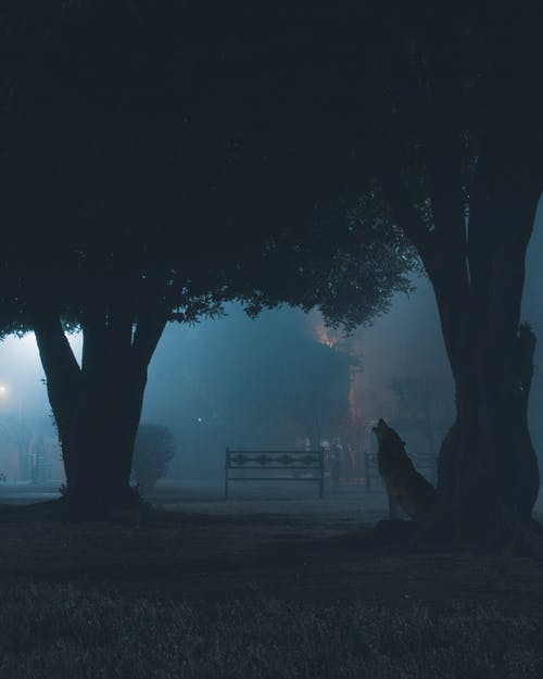 Free stock photo of Adobe Photoshop, city park, foggy, Foggy landscape
