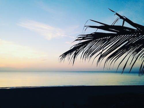 海灘 的 免费素材照片