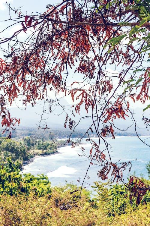 Gratis stockfoto met Bali, bladeren, boom, boomtakken
