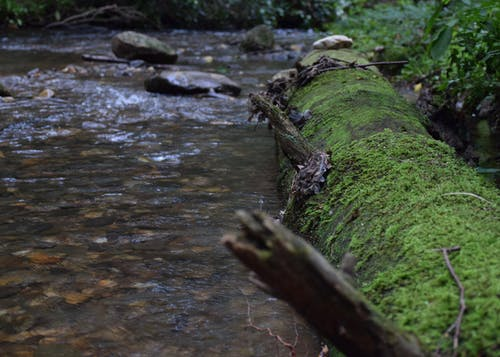개울, 노스 조지아, 통나무의 무료 스톡 사진
