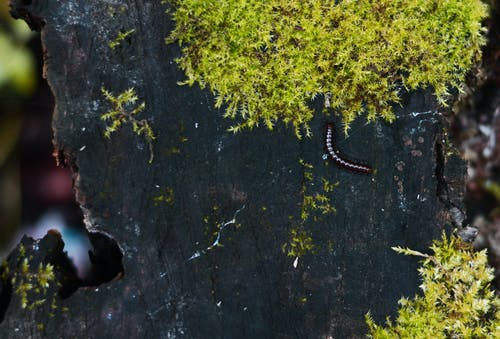 Ingyenes stockfotó erdő, moha, scolopendra, természetes témában