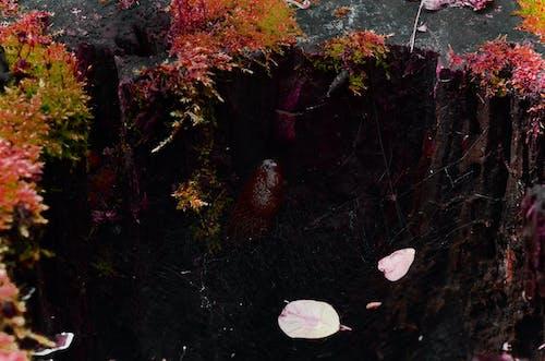 Ingyenes stockfotó csiga, erdő, fa, moha témában