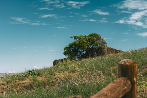 Fotos de stock gratuitas de al aire libre, árbol, campo, campo de hierba