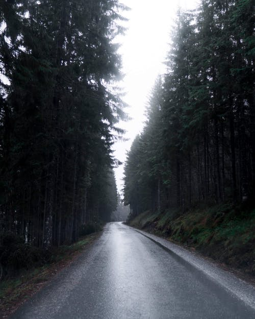 Photo of Roadway Surrounded by Trees