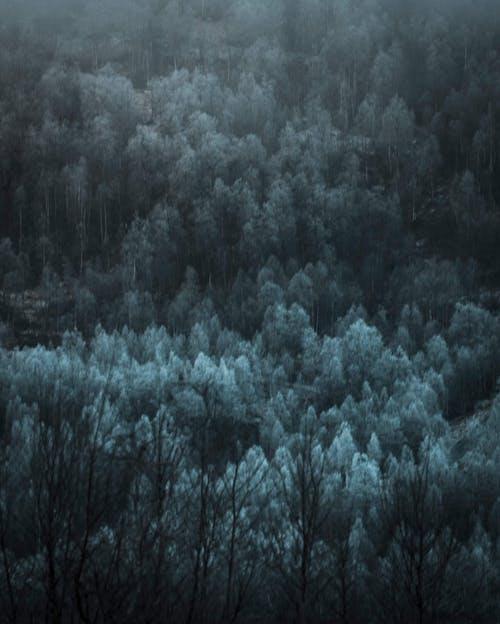 Immagine gratuita di alberi, foresta, fotografia della natura, meteo