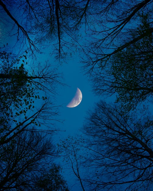 Free stock photo of forest, half-moon, moon, night