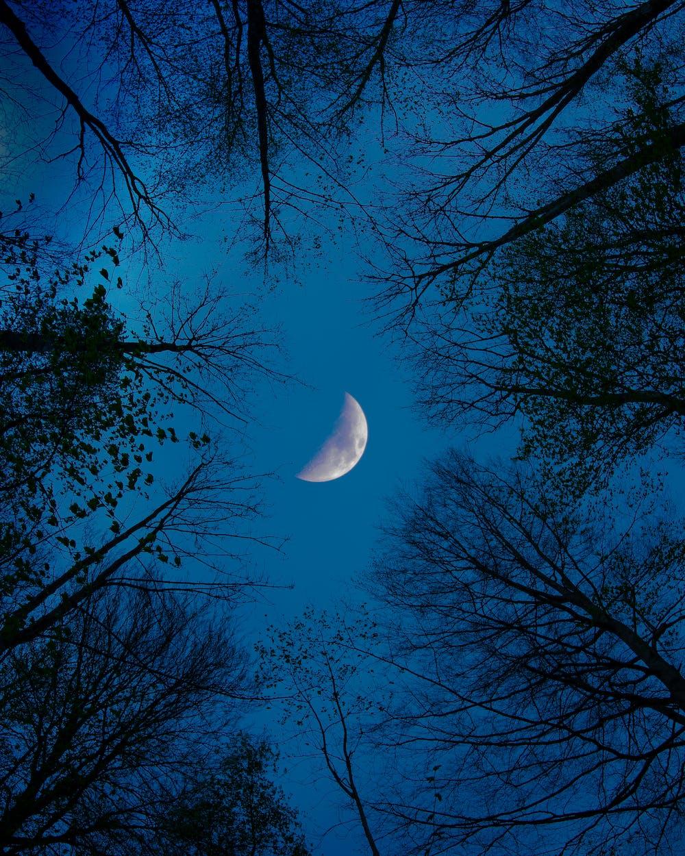 Каждый день, картинки лунная ночь в лесу