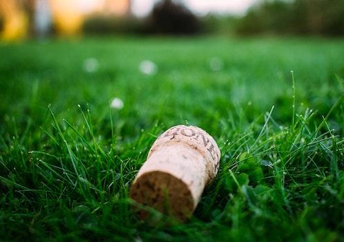 Free stock photo of wood, field, grass, lawn