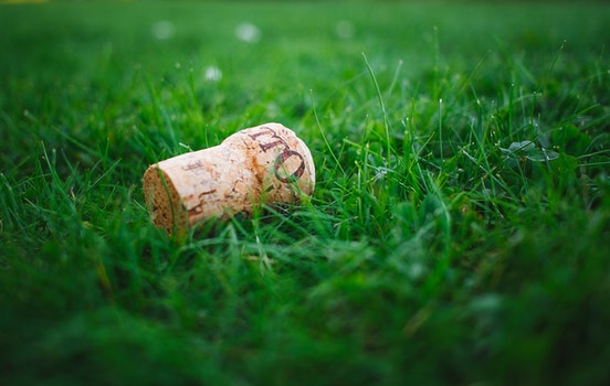 Free stock photo of wood, field, grass, lawn