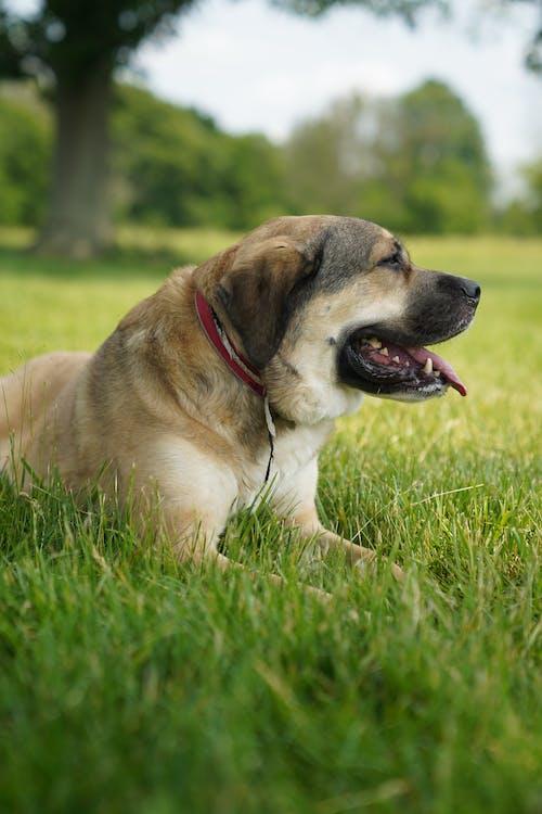 Darmowe zdjęcie z galerii z na zewnątrz, natura, pies, światło dzienne