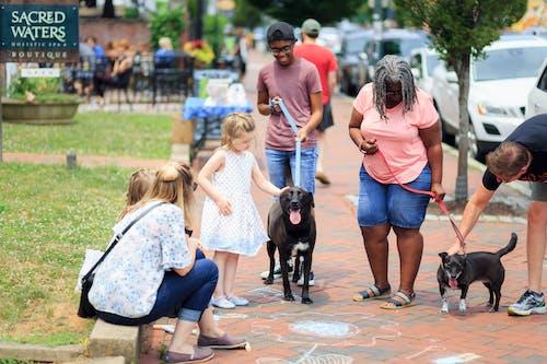 Fotos de stock gratuitas de al aire libre, arboles, calle, canino
