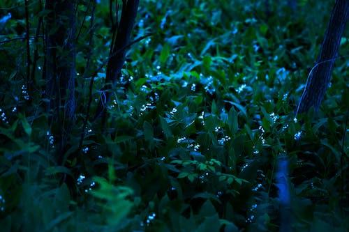 Immagine gratuita di chiaro di luna, fiori, illuminato dalla luna, mezzanotte
