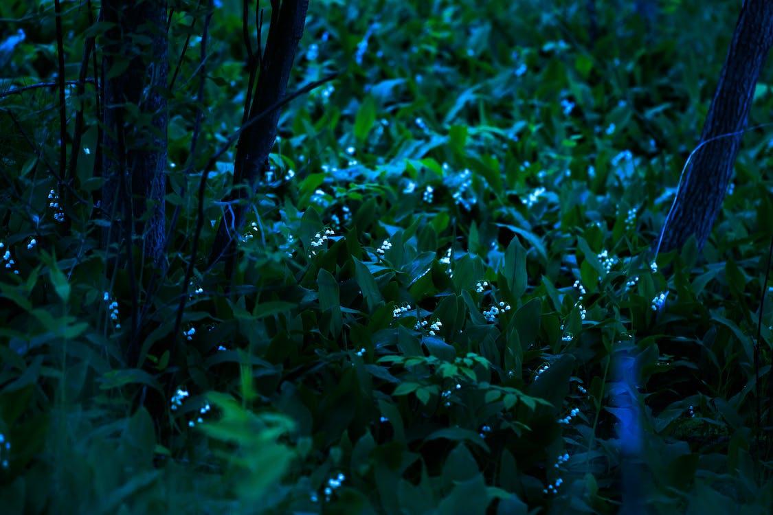ánh trăng, hoa, nữa đêm