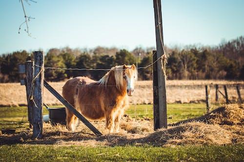 Fotobanka sbezplatnými fotkami na tému cicavec, dedinský, domáce zviera, hnedá