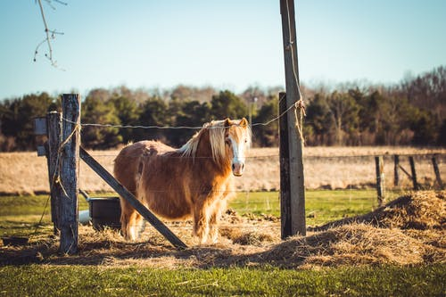 Foto d'estoc gratuïta de animal, animal de granja, animal domèstic, bestiar