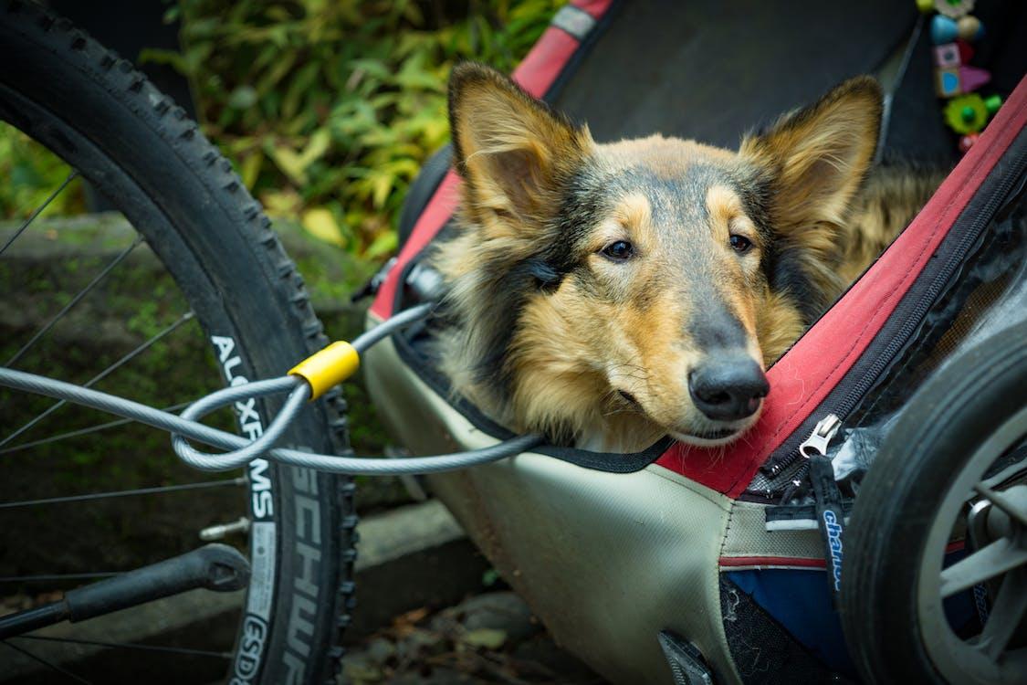 Kostenloses Stock Foto zu draußen, fahrrad, gras