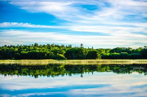 Imagine de stoc gratuită din apă, arbori, cer, codru