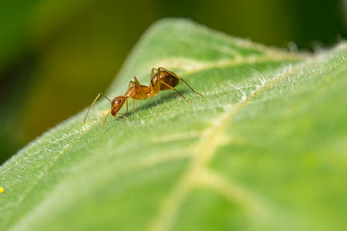 Image result for ant on a leaf Pinterest